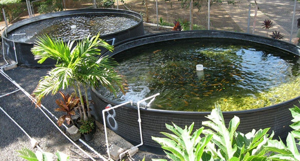 Aquatic Farming